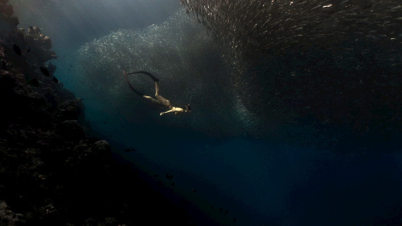 Pescador Moalboal sardine run-Tourist Spots That are Worth Flying to Cebu For
